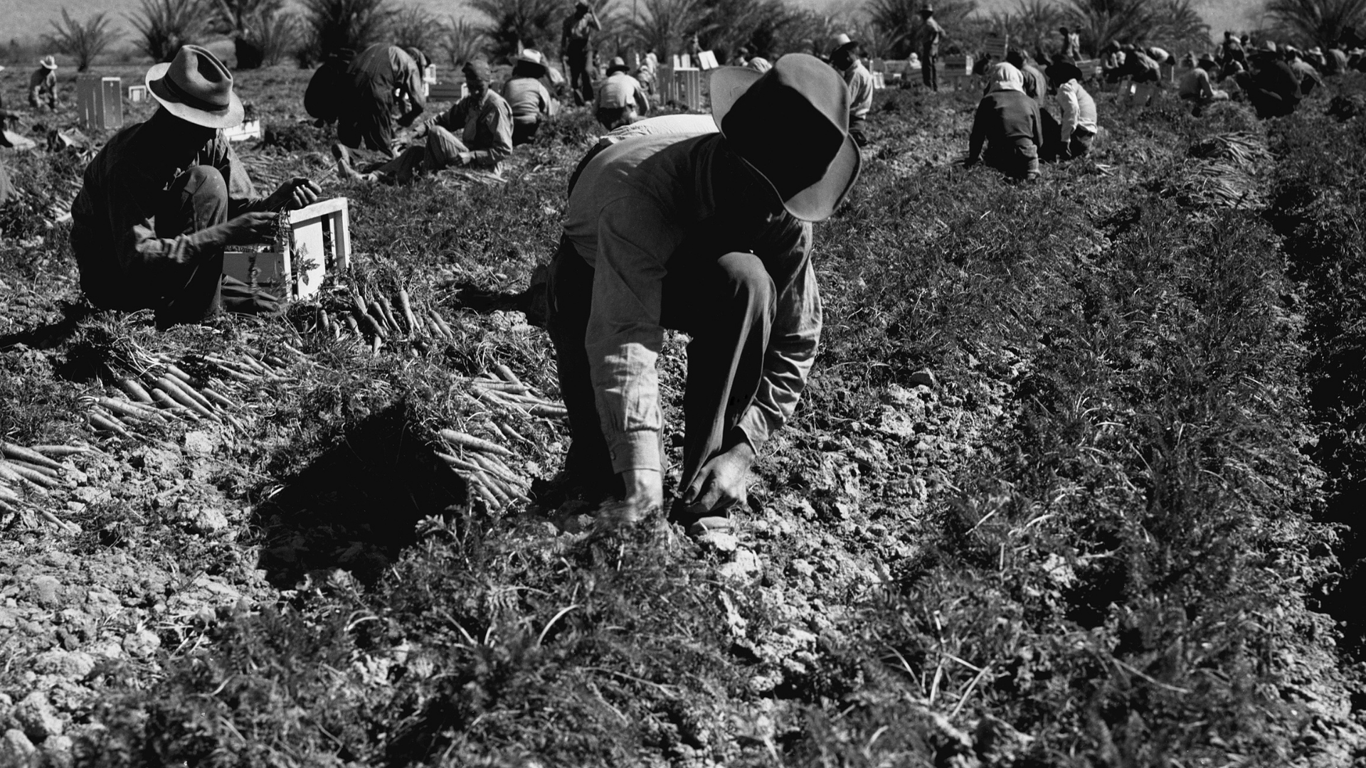 COVID-19, migrant workers, temporary workers, international students, Canada, farm workers, foreign workers