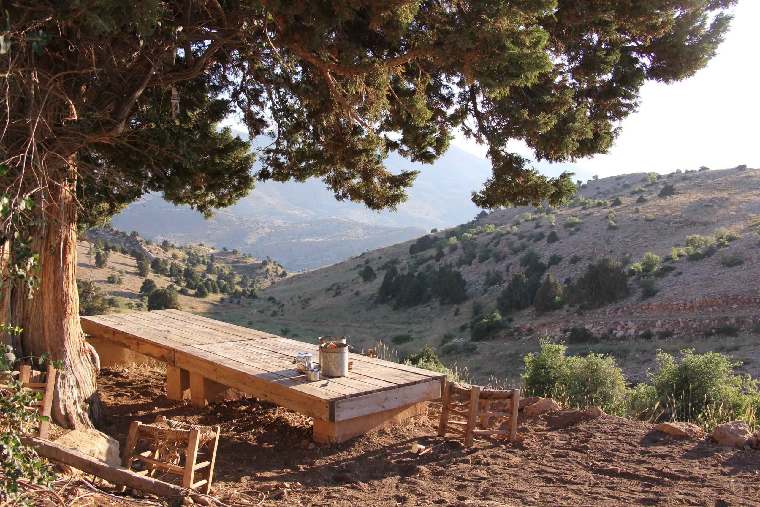 le cèdre libanais