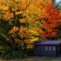 Fall trees - Mohamed/Unsplash